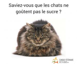 statistique-chat-veterinaire-plateau